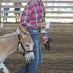 Coughlin Arena hosts Donkey Show