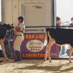 Combined Dairy Show nets winners at fair