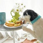 Careful: Some people foods just aren't good for dogs