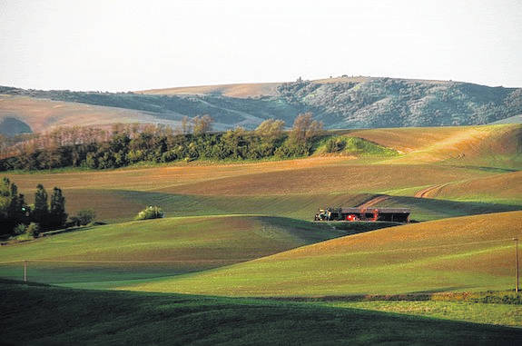 Farm incomes are expected to rise this year. It stems from national gains in sales of cattle, hogs, poultry, eggs, and dairy, and the sale of stored crops harvested in a prior year.