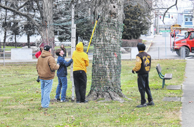 West Jefferson High School students wrap the trees with Christmas lights at Garrette Park in West Jefferson Tuesday for the village's Christmas in the Park. There were 22 juniors and seniors from the National Honor Society helping transform the park for the three day event which starts Friday at 6 p.m. and runs through Sunday.