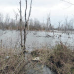 County officials sack beavers